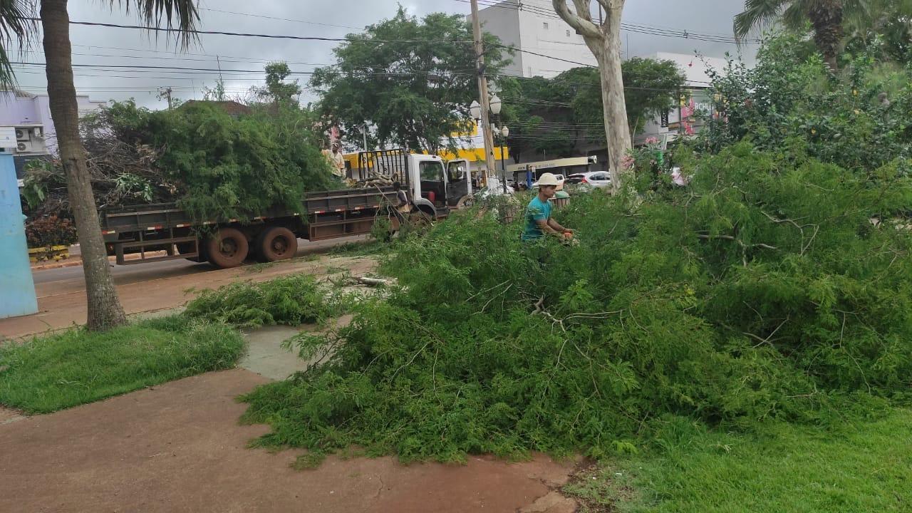 Prefeitura faz poda de emergência e limpeza na área central