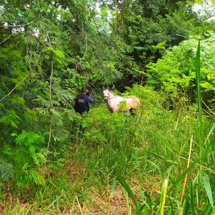 Guarda Municipal Ambiental resgata animais em situação de abandono